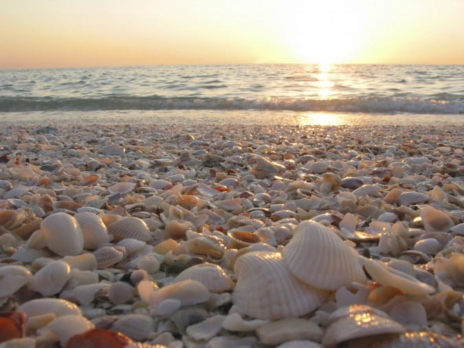 shells on your morning walk