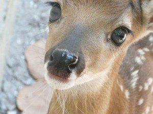 Wildlife Inc. – Animal Rescue on Anna Maria Island