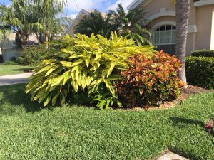 Local Lawn Care – Shady Lady Horticultural Services