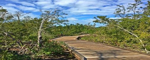 Neal Preserve – Located in Bradenton, Just off Anna Maria Island