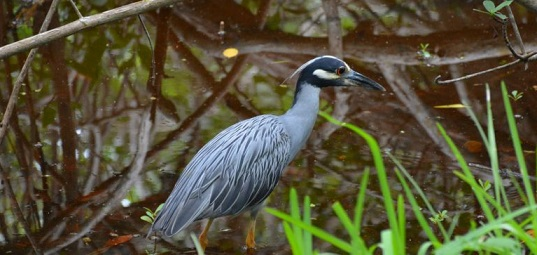 Riverview Pointe Preserve is 11 Acres of Wildlife and Nature Trails
