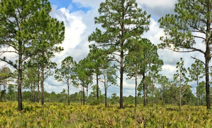 Explore Duette Preserve – The Largest Preserve in Manatee County