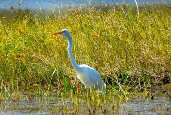 Leave the Pets and Bikes at Home to Enjoy Perico Preserve