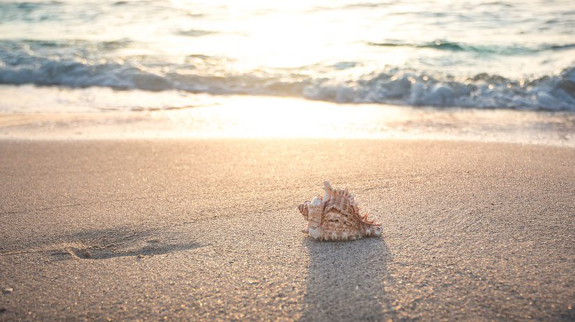 Your Guide to Shelling on Anna Maria Island Beaches!