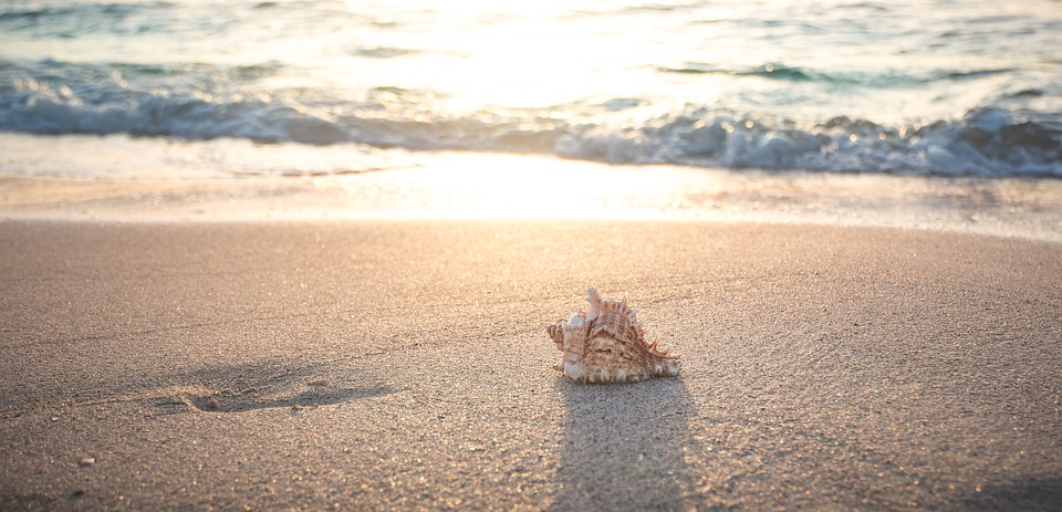 Shell on Anna Maria Island Beach