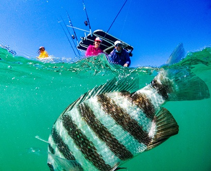 Local Fishing Charters for Anna Maria Island