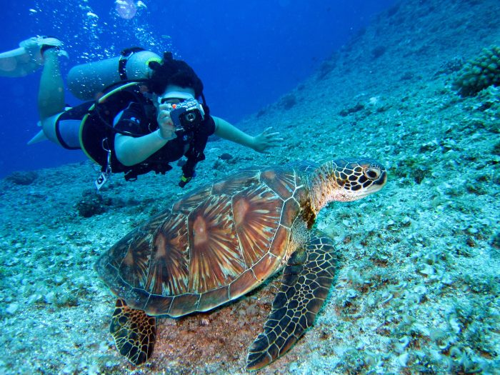 Scuba Diver in Belize on Affordable Honeymoon