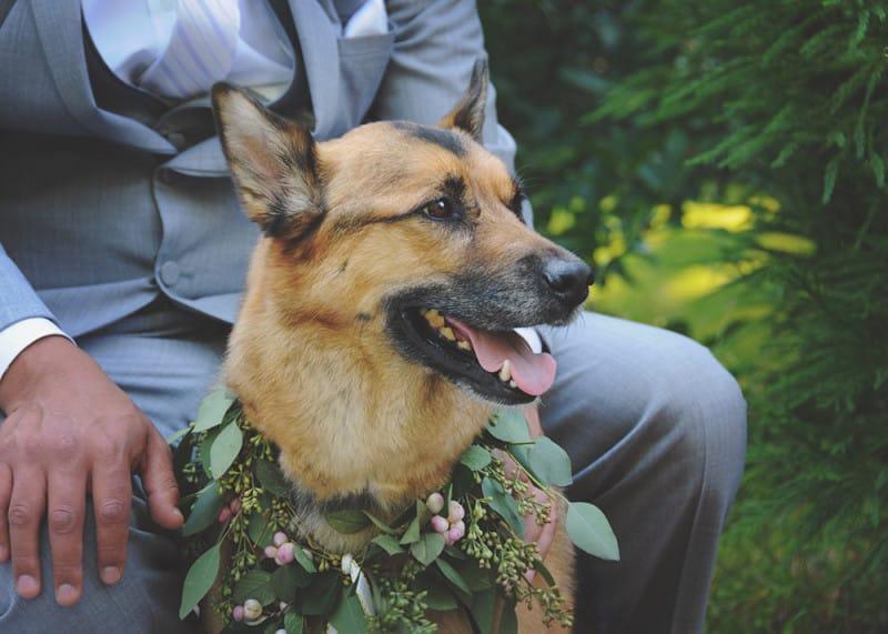 favorite spring weddings SpringWeddingsDog