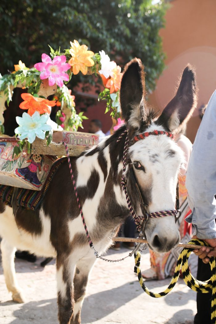 Donkey at Traditional Mexican Wedding in San Miguel de Allende