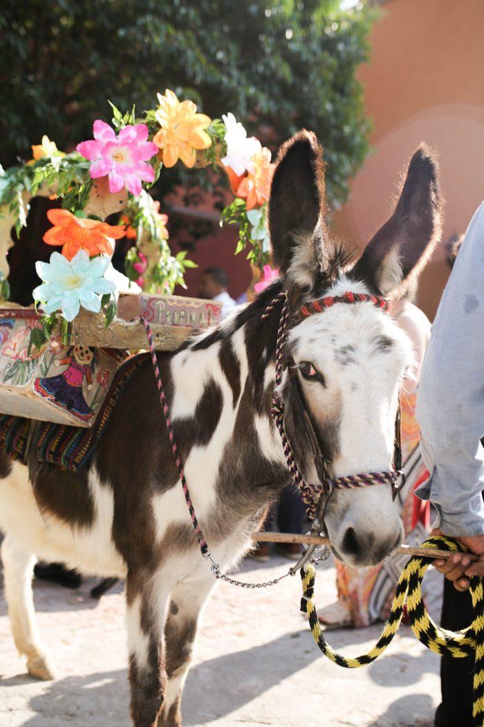 Donkey at Mexican Wedding Callejoneada