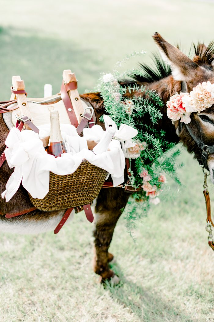 A Cute Donkey Carrying Alcohol in Baskets for a Micro Wedding