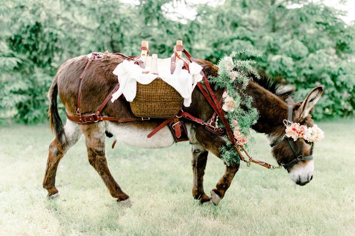 Cute Donkey Carrying Beverages on Back at Real Wedding