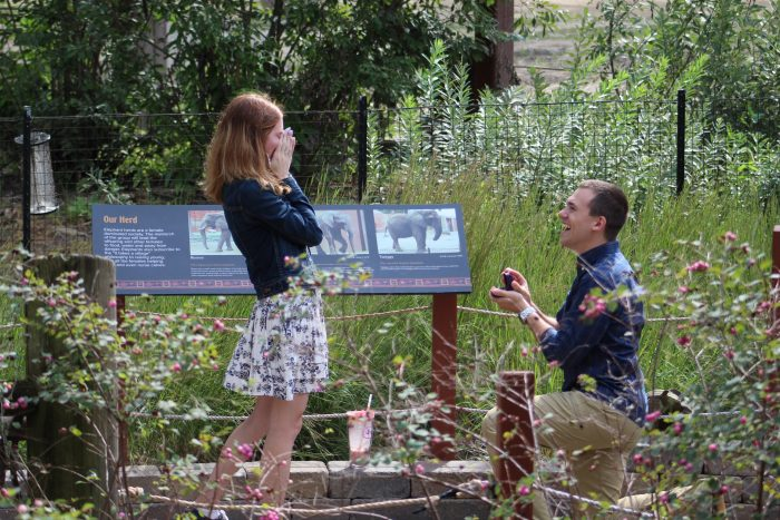 Boyfriend Proposing to His Girlfriend at the Zoo