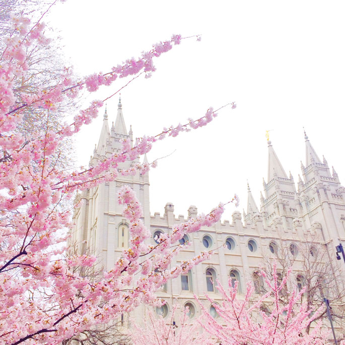 blossoms-salt-lake-temple-pink-peonies