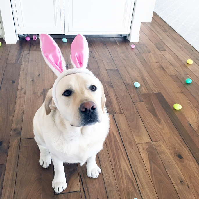 labs-on-easter