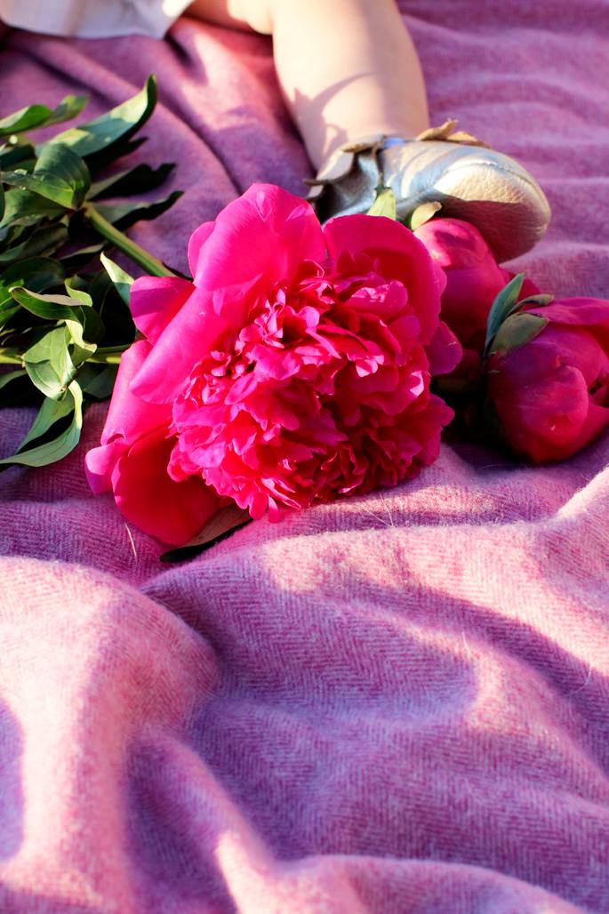 pink-peonies-3