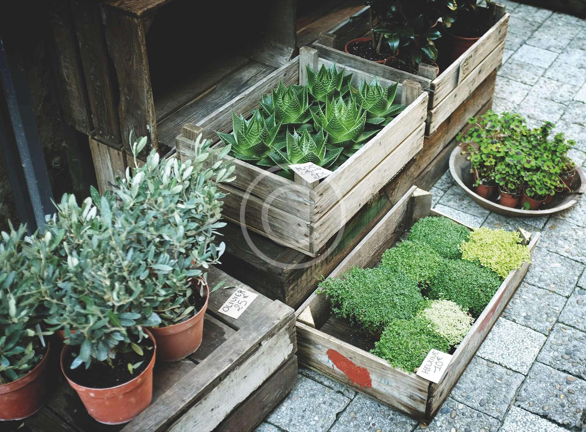 Support the garden maintenance