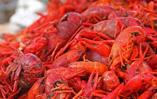 Cajun Crawfish Bash