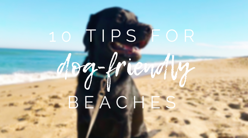 10 Tips for Dog Friendly Beaches
