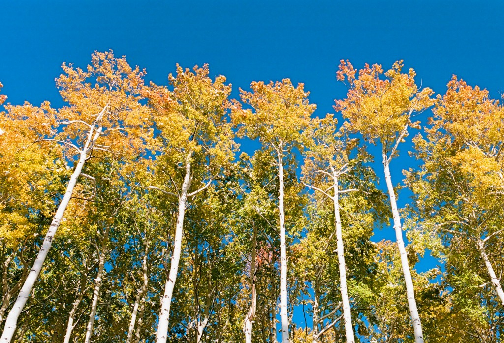 Changing Seasons Film photography contest